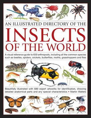 Illustrated Directory of Insects of the World: A Visual Reference Guide to 650 Arthropods, Including All the Common Species Such as Beetles, Spiders, Crickets, Butterflies, Moths, Grasshoppers and Flies (Paperback)