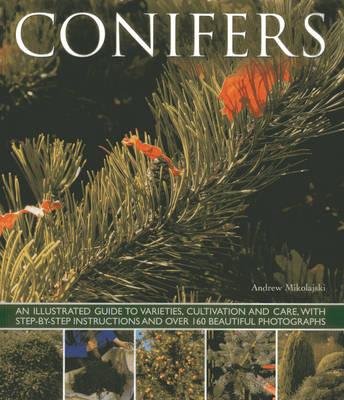 Conifers (Paperback)