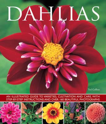 Dahlias (Paperback)