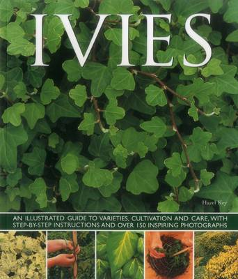 Ivies (Paperback)