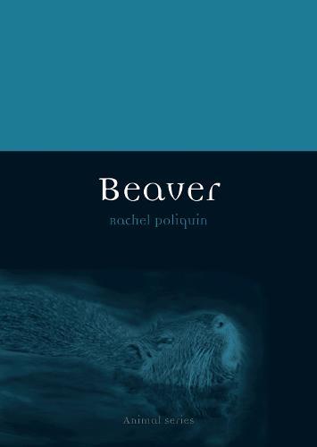 Beaver - Animal (Paperback)