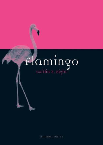 Flamingo - Animal (Paperback)