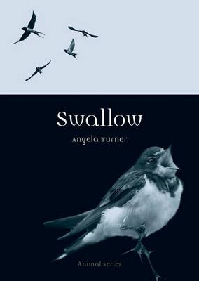 Swallow - Reaktion Books - Animal (Paperback)