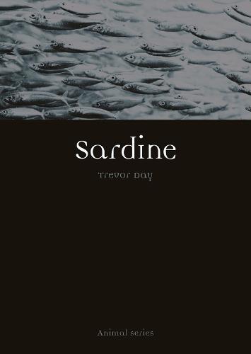 Sardine - Animal (Paperback)