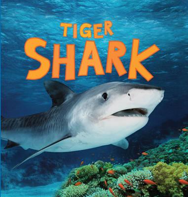 Discover Sharks: Tiger Shark - Discover Sharks (Hardback)