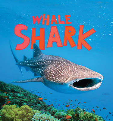 Discover Sharks: Whale Shark (Paperback)