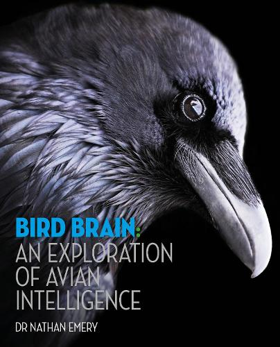 Bird Brain: An exploration of avian intelligence (Hardback)