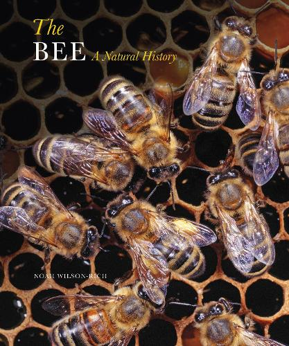 The Bee: A Natural History (Paperback)
