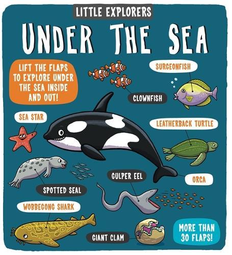 Little Explorers Under the Sea - Little Explorers (Hardback)