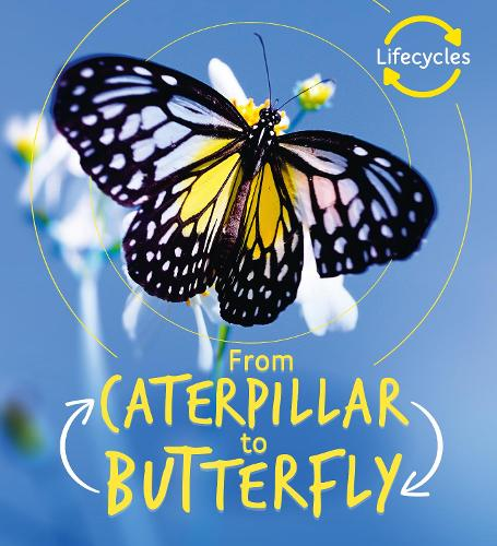 Lifecycles: Caterpillar to Butterfly - LifeCycles (Paperback)
