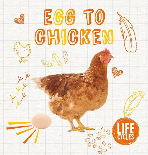 Egg to Chicken - Life Cycles (Hardback)