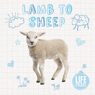 Lamb to Sheep - Life Cycles (Hardback)