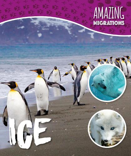Ice - Amazing Migrations (Hardback)