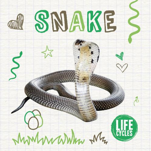 Snake - Life Cycles (Paperback)