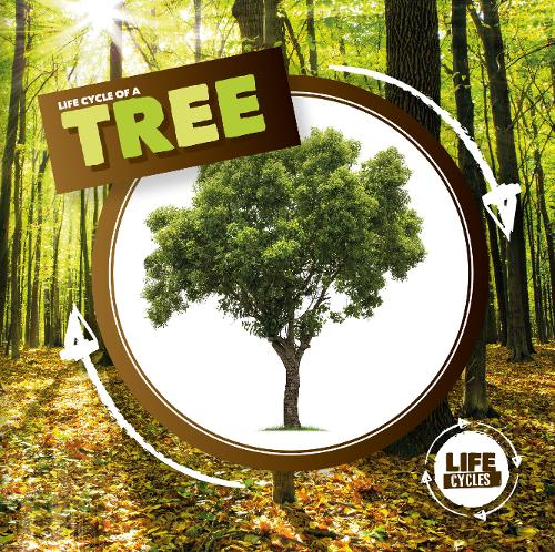 Life Cycle of a Tree - Life Cycles (Hardback)