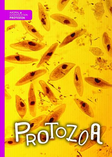 Protozoa - Animal Classification (Hardback)
