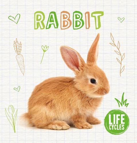 Rabbit - Life Cycles (Hardback)