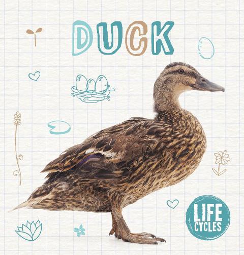 Duck - Life Cycles (Hardback)