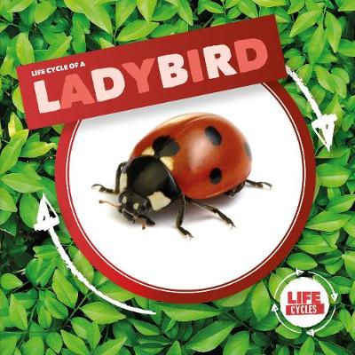 Ladybird - Life Cycle of A... (Hardback)