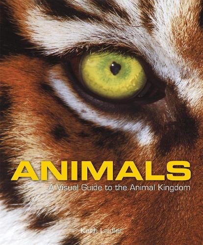 Animals: A Visual Guide to the Animal Kingdom (Hardback)