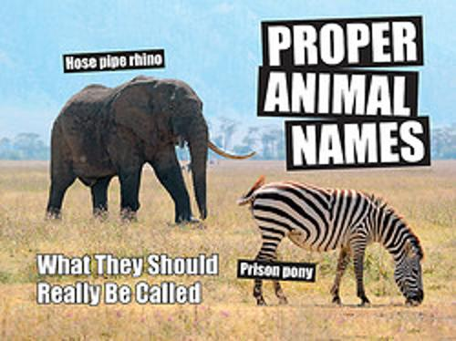 Proper Animal Names: What They Should Really Be Called (Hardback)