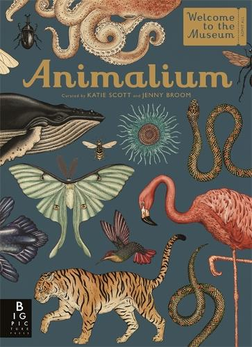 Animalium - Welcome To The Museum (Hardback)