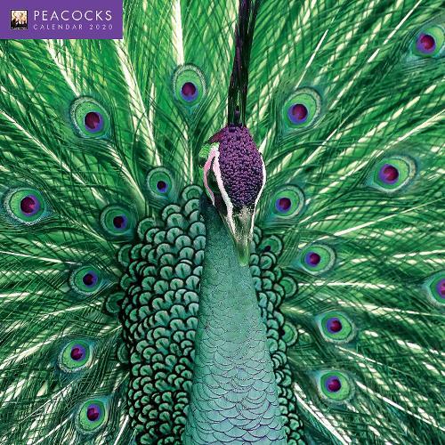 Peacocks Wall Calendar 2020 (Art Calendar) (Calendar)
