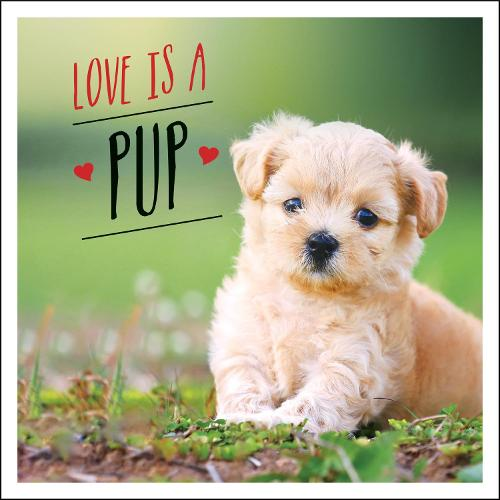 Love is a Pup: A Dog-Tastic Celebration of the World's Cutest Puppies (Hardback)
