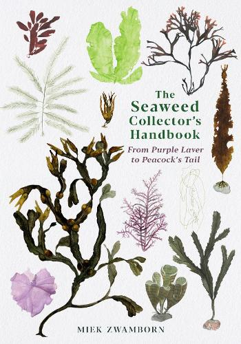 The Seaweed Collector's Handbook: From Purple Laver to Peacock's Tail (Paperback)