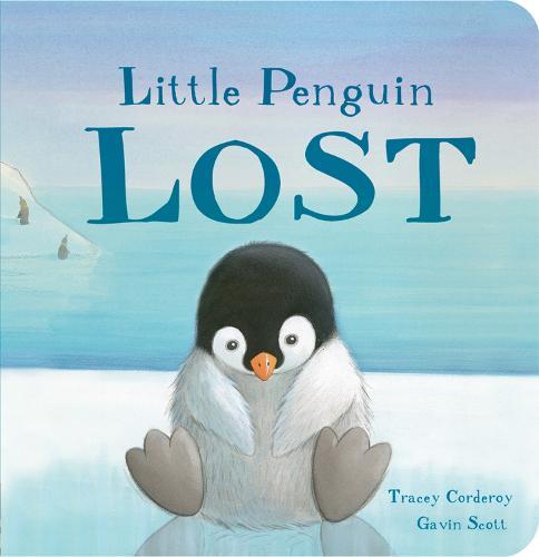 Little Penguin Lost (Board book)
