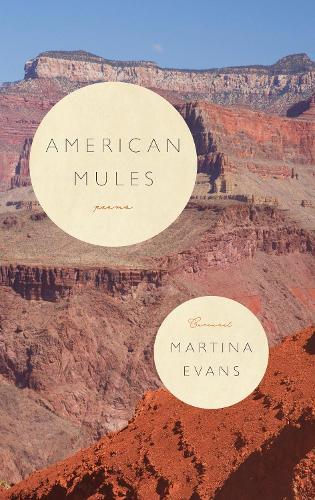 American Mules (Paperback)