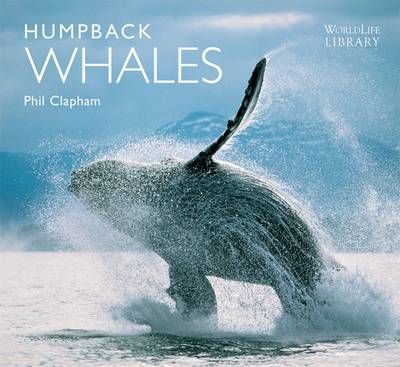 Humpback Whales (Paperback)