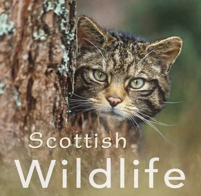Scottish Wildlife - Colin Baxter Gift Book (Paperback)