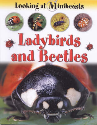 MINIBEASTS LADYBIRDS & BEETLES (Paperback)
