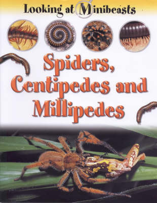 MINIBEASTS SPIDERS & CENTIPEDES (Paperback)