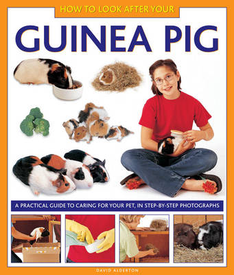 How to Look After Your Guinea Pig (Hardback)