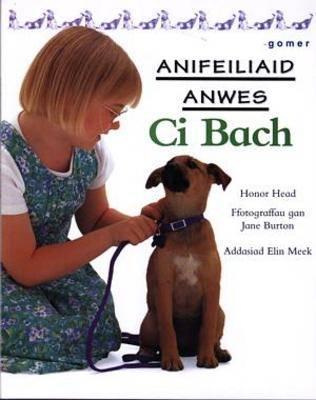 Ci Bach - Cyfres Anifeiliaid Anwes (Paperback)