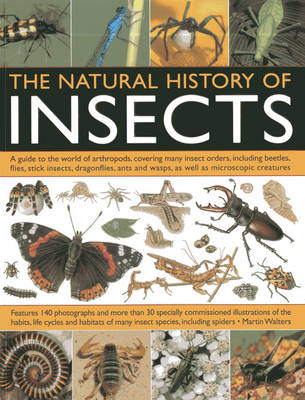 Natural History Of Insects (Paperback)