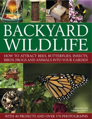 Backyard Wildlife (Paperback)