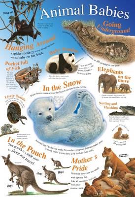 Animal Babies - Natural History Wallchart (Wallchart)