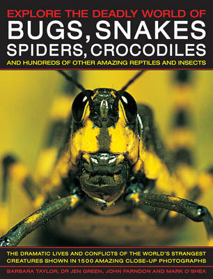 Explore the Deadly World of Bugs, Snakes, Spiders, Crocodiles: And Hundreds of Other Amazing Reptiles and Insects (Hardback)