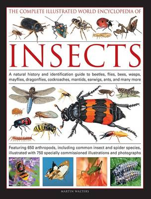 Complete Illustrated World Encyclopedia of Insects (Paperback)
