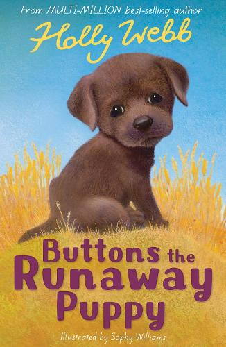 Buttons the Runaway Puppy - Holly Webb Animal Stories 10 (Paperback)