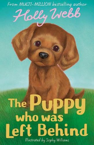 The Puppy who was Left Behind - Holly Webb Animal Stories (Paperback)