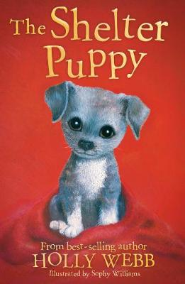 The Shelter Puppy - Holly Webb Animal Stories 40 (Paperback)