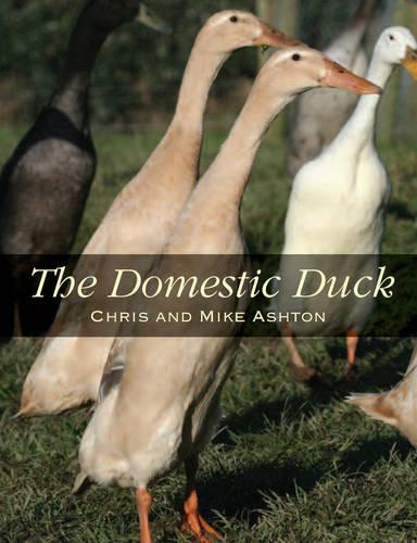 The Domestic Duck (Paperback)