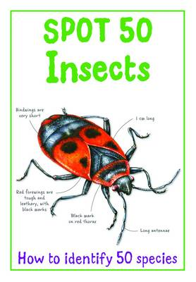 Spot 50 - Insects (Paperback)