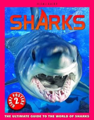 Sharks Poster Book - Poster Books (Spiral bound)