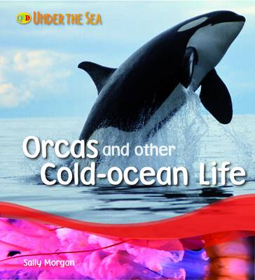 Orcas and Other Cold Ocean Life - Under the Sea (Paperback)