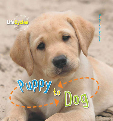 Life Cycles: Puppy to Dog (Paperback)